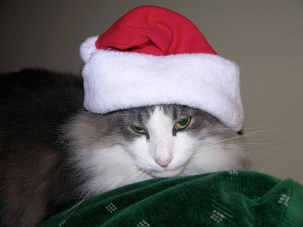 Verbatim Gibberish Sean Sandulak Cat Hates War on Christmas