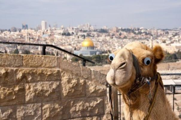 Sallah, I said no camels.