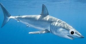 Shark300